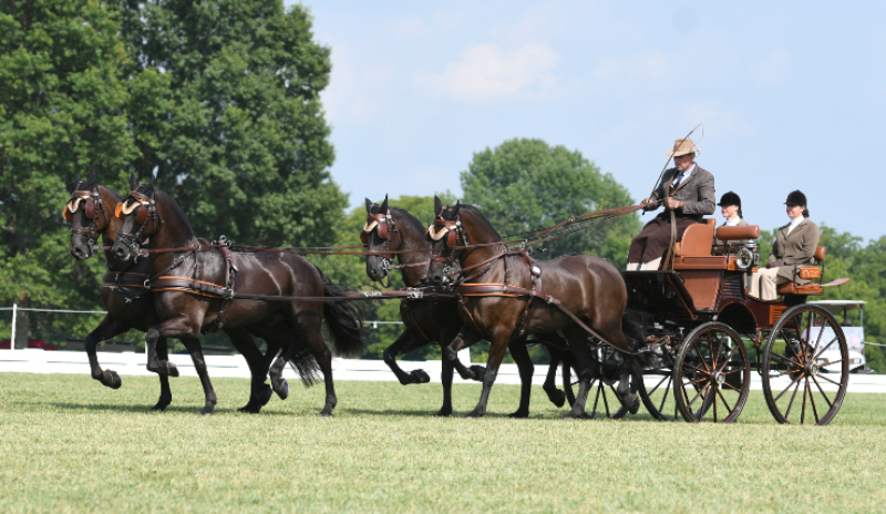 combined-driving-wiebe-dragstra-arabo-friesians-four-in-hand